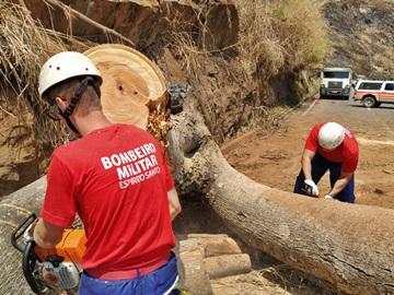 Corpo de Bombeiros do Estado realiza corte de árvore de grande porte na rodovia estadual