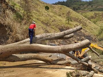Corpo de Bombeiros do Estado realiza corte de árvore de grande porte na rodovia estadual 2