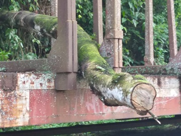 Queda de árvores é ameaça em um bairro de Marechal Floriano