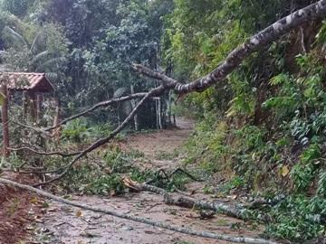 Tempestade na estrada de Rio Fundo em Marechal Floriano derruba árvores e destelha casas