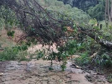 Tempestade na estrada de Rio Fundo em Marechal Floriano derruba árvores e destelha casas 2