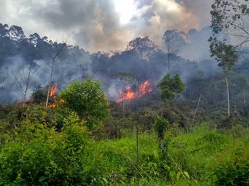 Bombeiros combatem incêndio em vegetação no interior de Domingos Martins