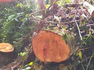 Prefeitura irá remover restos de árvores derrubadas por tempestade
