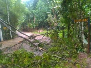 Tempestade derruba mais árvores em estrada e causa prejuízos em Marechal Floriano