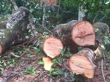Ventania derruba árvores e interdita estrada em Marechal Floriano 5