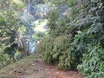 Árvores derrubadas por temporal são retiradas de estradas vicinais em Marechal Floriano