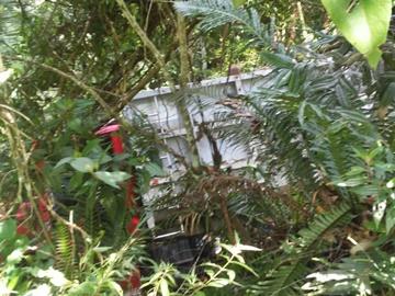 Caminhão descontrolado cai em matagal ao lado da BR 262