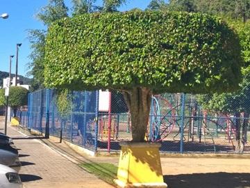 Corte de galhos embeleza árvores em ruas de Marechal Floriano