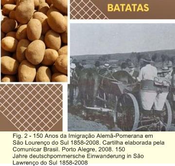 OS POMERANOS E O CULTIVO DE BATATAS 2