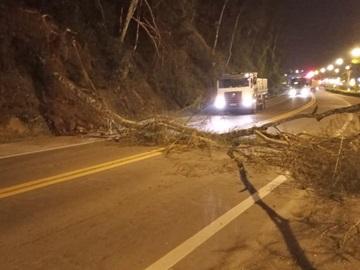 Árvore cai na BR 262 e para o trânsito em Marechal Floriano