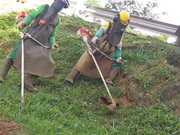 Matos são cortados em Marechal Floriano após retirada das árvores caídas