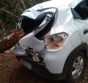 carro atingido por árvore 2 m