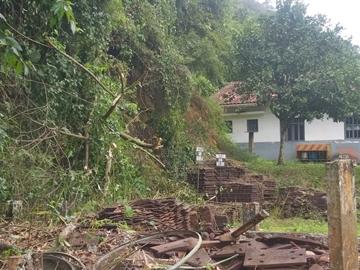 Após quase dois meses ferroviários cortam árvores caídas em linha de trem