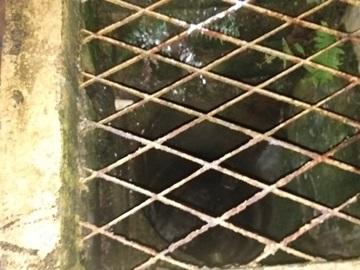 Bombeiros salvam dois gatos que caíram em esgoto pluvial em Marechal Floriano