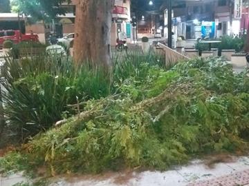 Galhos de árvore são cortados para evitar quedas na rede elétrica em Marechal Floriano