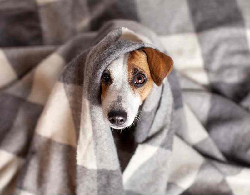 cachorro-com-frio