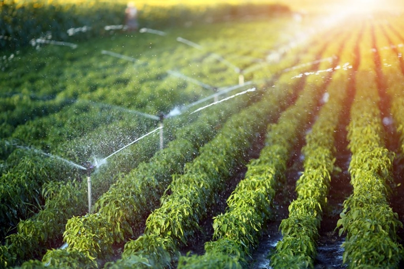 irrigacao-economica