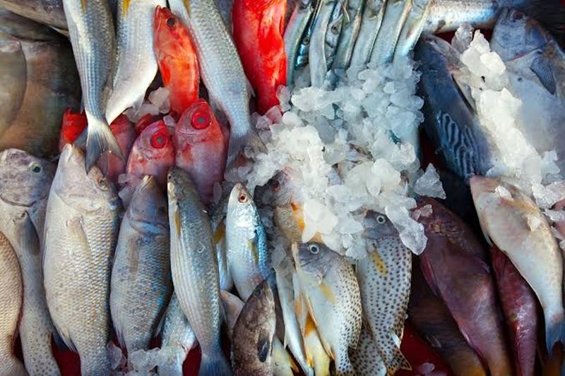 peixes-com-doenca-de-haff