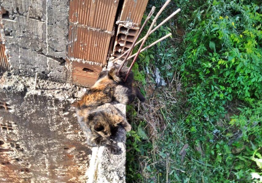 Gato-cai-de-predio-e-bombeiros-fazem-resgate-delicado